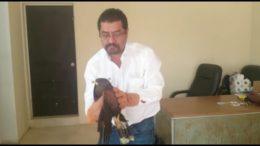 thumbnail_RESCATE AGUILA HARRIS TAMAULIPAS PROFEPA2